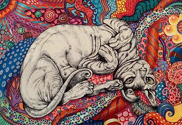 Acid Cat.jpg