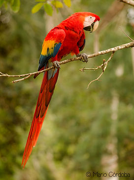 Birdwatching tropics