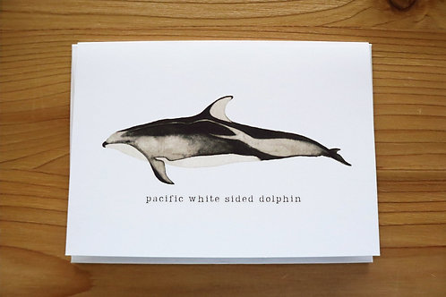 5x7 greeting card - pacific white sided dolphin