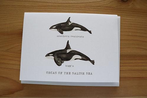 5x7 greeting card - orcas of the salish sea