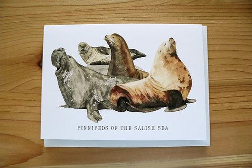 5x7 greeting card - pinnipeds of the salish sea