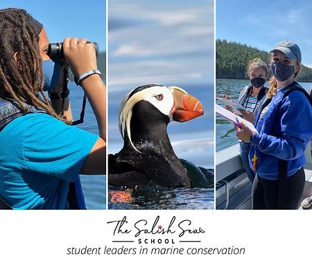 marine bird survey (1).png