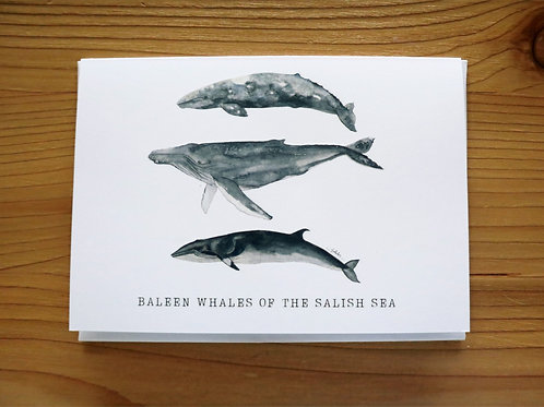 5x7 greeting card - baleen whales of the salish sea