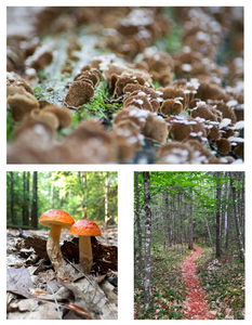 Images from New Hampshire © TerraLens Photography LLC
