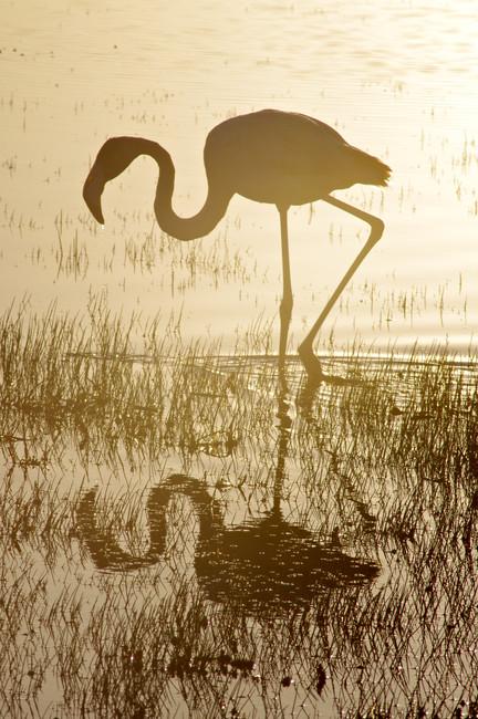 Sunlit Reflection