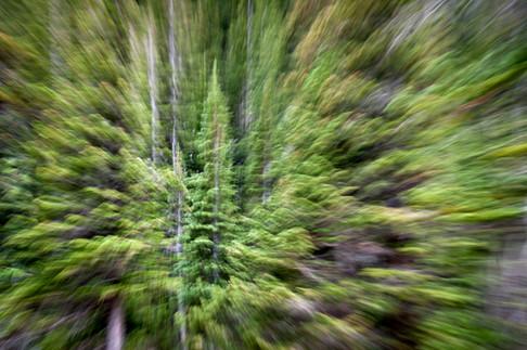 Forest Fever