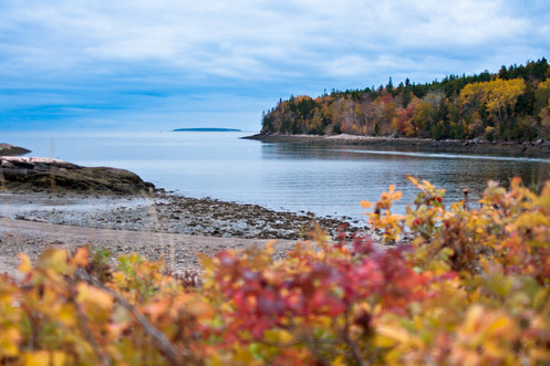 Acadian Fall