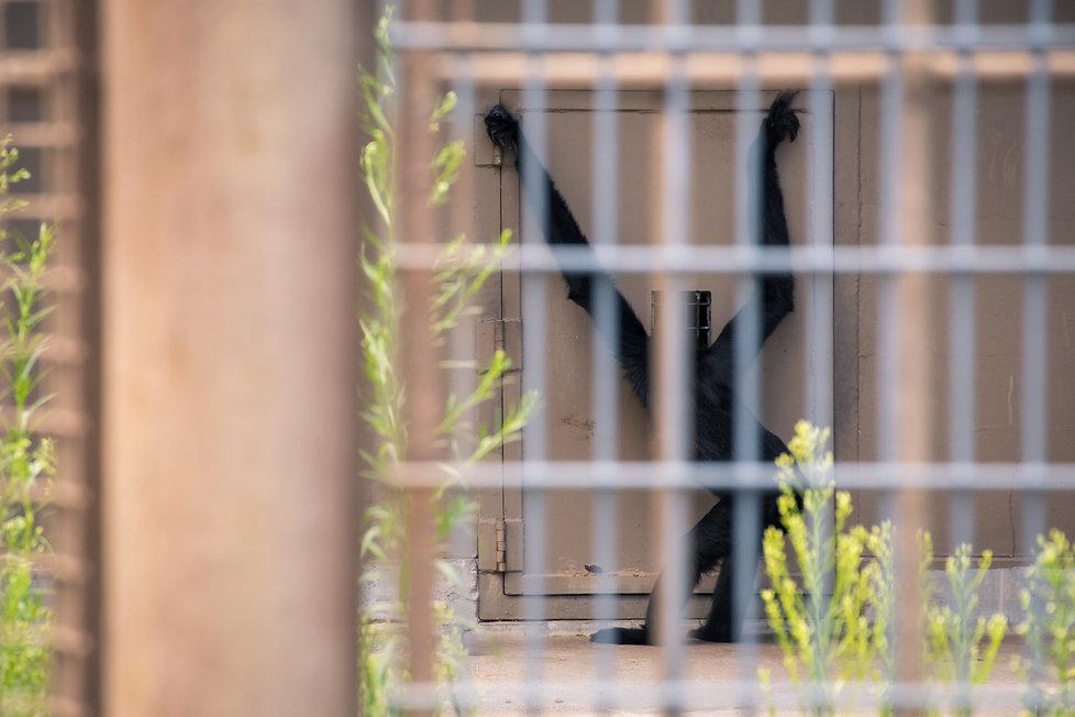 The Captive.jpg