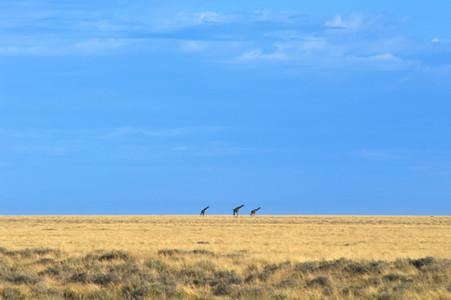 Giants of the Savanna