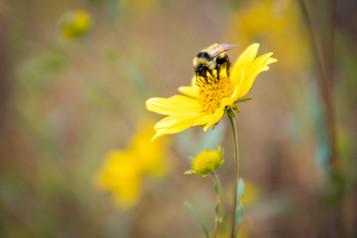 Wildflower Pollination