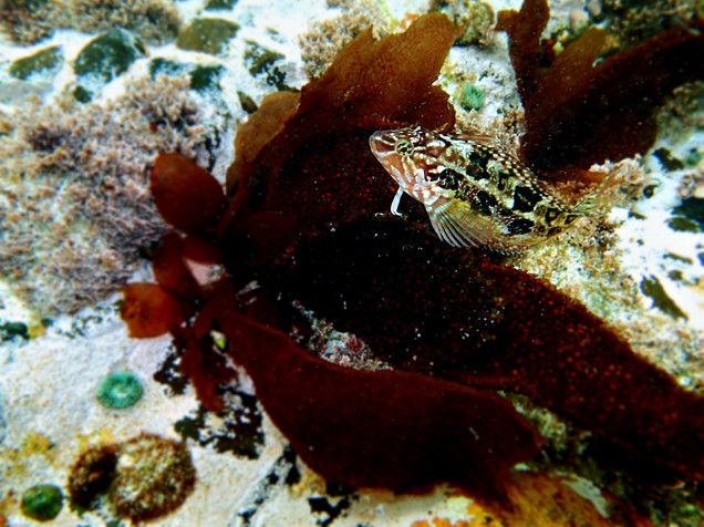 Klipfish