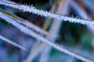 Grass Crystals