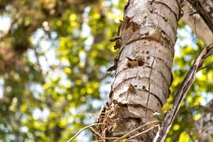 Woodpecker's Nest.jpg