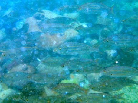 Monet's Fish