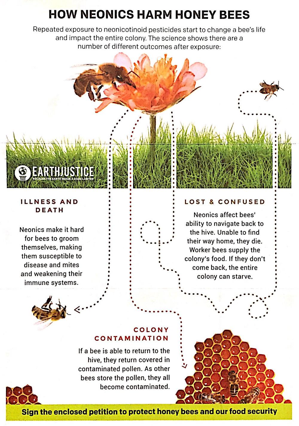 How Neonics Harm Honey Bees Infographic