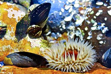 Life in the Intertidal