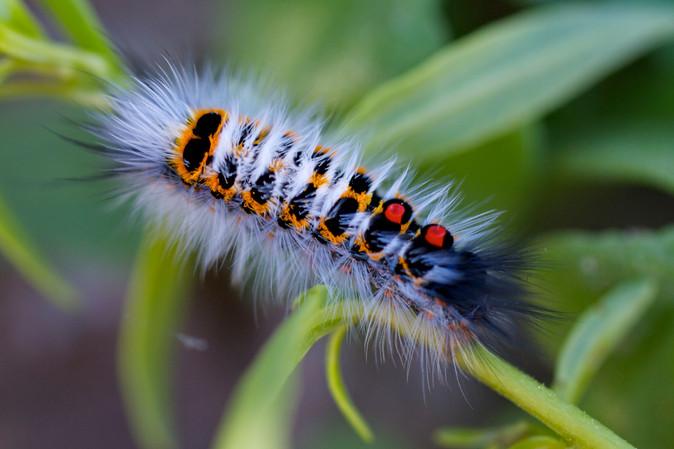 Colorful as a Caterpillar