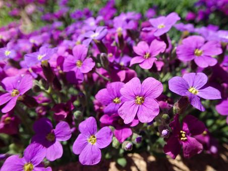 Indigo Spring