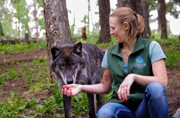 Wolf Encounters