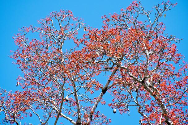 Tree of Fire.jpg