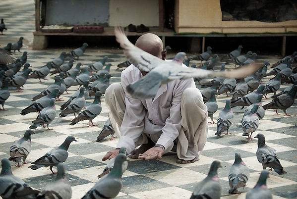 Pigeon Feeder Pushkar, India by Wesley Storey photographer