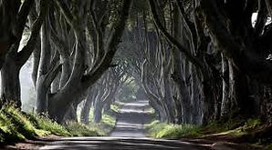 The Dark Hedges Game of Thrones