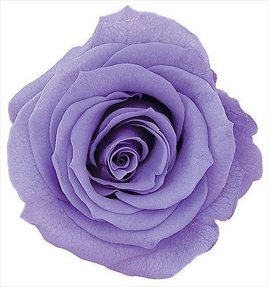 BOX OF 8 BLOOMS OHC-05203-411 Rose Kanon Lavender