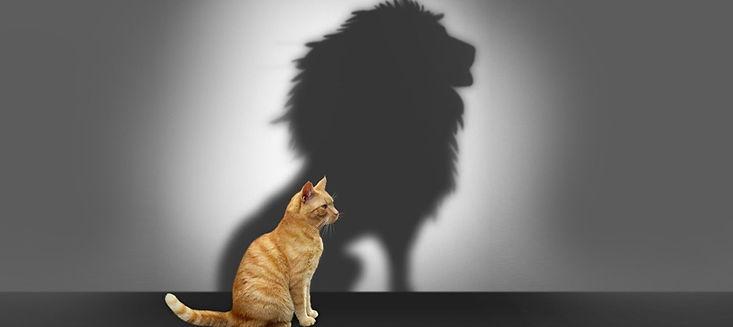 cat-lion-shadow-fb_edited_edited.jpg