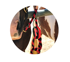 Horse Safety tie with rope