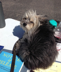 Reading on a Lazy Dog Day Afternoon