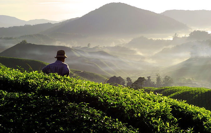 farmer-at-tea-plantation-PXWNXZT.jpg