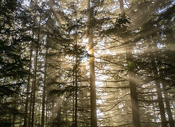 nature soleil foret.jpg