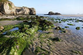 Cornish Beaches.jpg