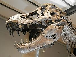 dinosaur-museum.jpg