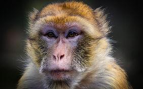 monkey sanctuary cornwall.jpg