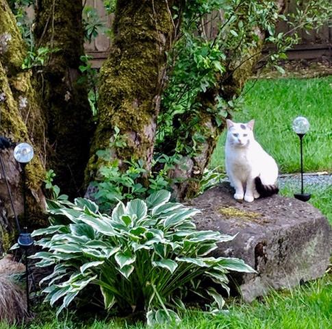 Cat Man-Du 1.jpg