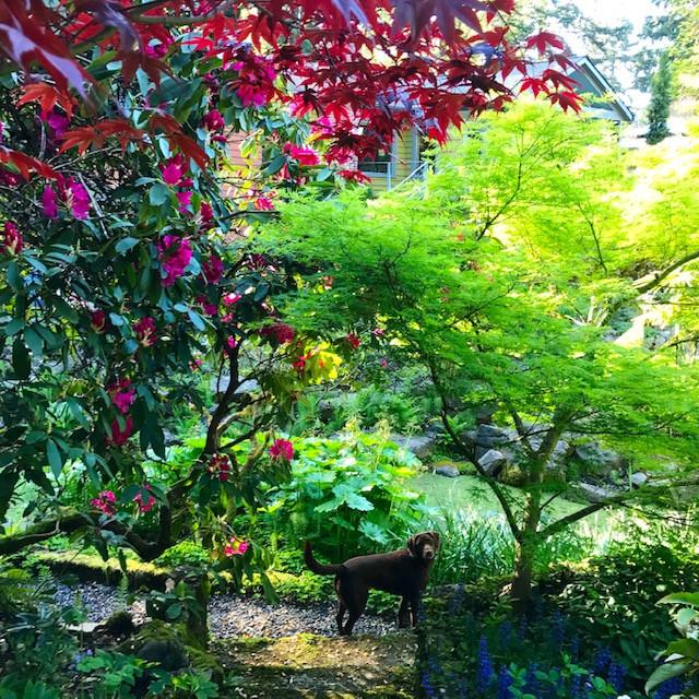 Quercus Terra