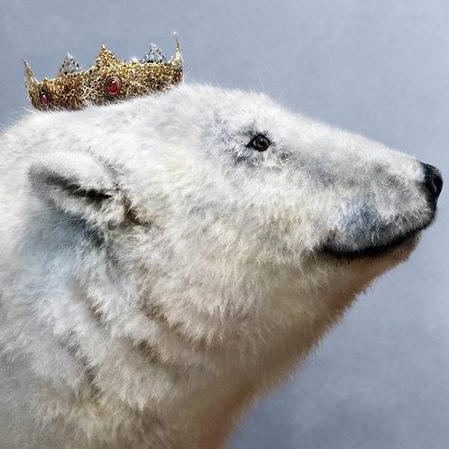 Kvitebjørn (video)