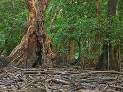 Mangrove Cedar Bay.