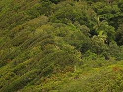 10k Simple notophyll vine forest