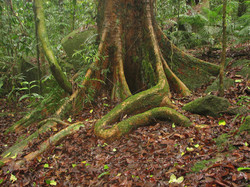 2a Mesophyll vine forest.