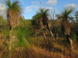 Forest Grass Trees