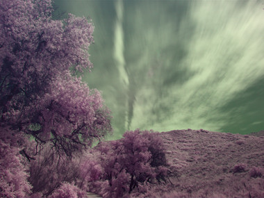 Infrared Photography and the Nikon D500