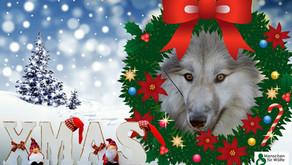 Wir wünschen fröhliche Weihnachten und ein gutes neues Jahr!