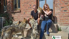 """""""Menschen für Wölfe"""" zu Gast bei vierbeinigen Superstars"""