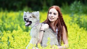 """Spendenaufruf: """"Menschen für Wölfe"""" wegen Corona-Krise in Not"""