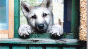 """Verlosung Nr.2: Sieben Exemplare vom kleinen Bildband """"Wolfsbilder"""""""