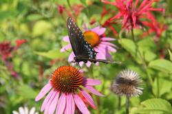 Butterflyflyer.jpg