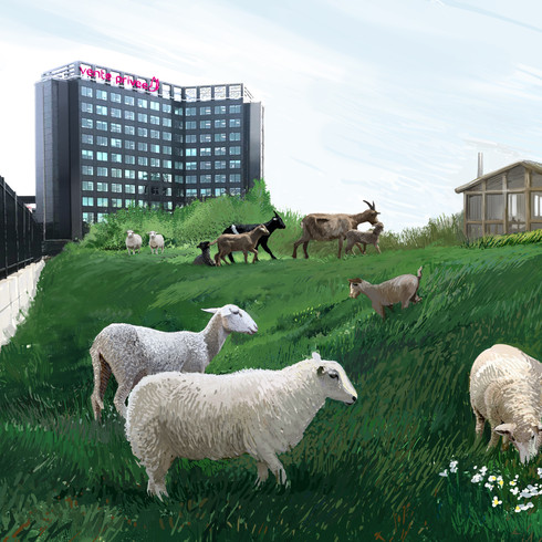 """Happy Vallée """"Chevres et Moutons"""""""