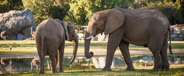 FCZ Elephant.jpg